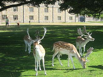 Deer_in_front_of_Knole_Park